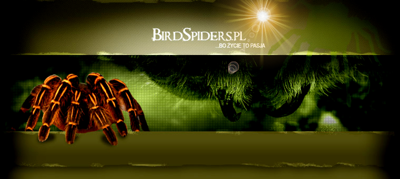 BirdSpiders.pun.pl